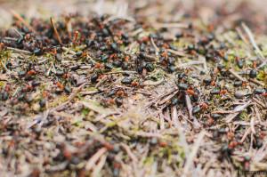 Mravenci v lese