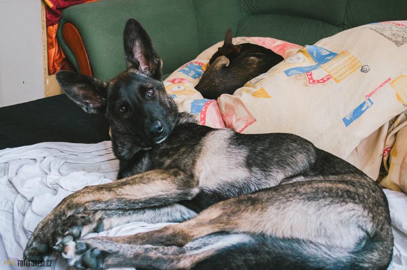 Můj pes Buči