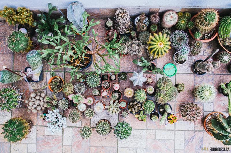 Sbírka sukulentů a kaktusů