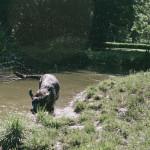 Buči ve vodě v Lužánkách