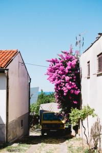 Zátiší v Chorvatsku