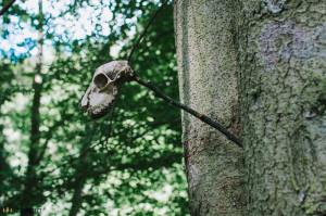 Lebka na stromě