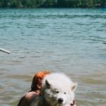 Samojed ve vodě