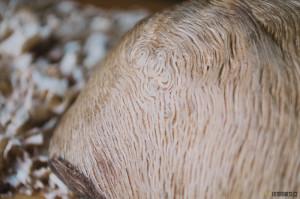 Vzor dubového nádoru