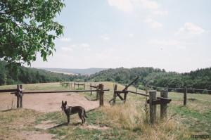 U koní v Soběšicích