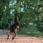 Na psím výběhu v Lužánkách