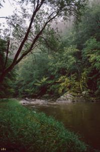 Mlha v lese po dešti