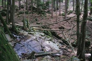Krásná příroda v okolí Blanska
