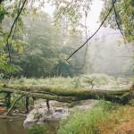 Po bouřce v lese