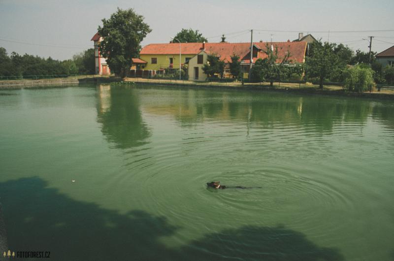 Rybník ve Zňátkách