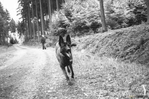 Pes Buči v lese