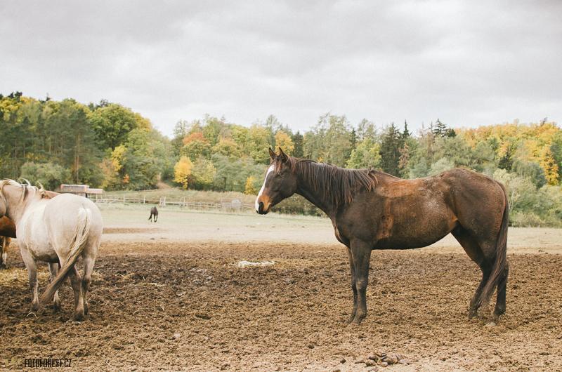 Koně Panská Lícha