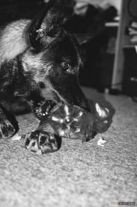 Buči s hračkou pro psy z PET lahve