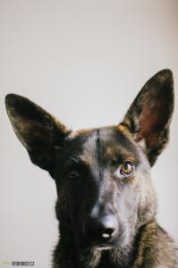 Pes Buči