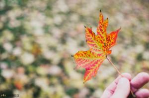 Podzim v Lužánkách
