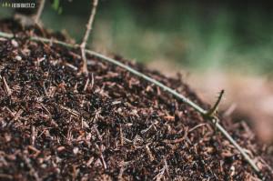 Mravenci z mraveniště