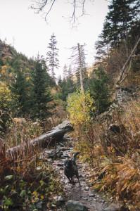 Údolí Bílé Opavy v Jeseníkách