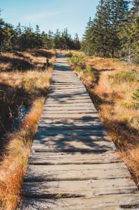 Dřevěný chodník, stezka v Jeseníku