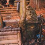 Lesní bar Horní Lipová