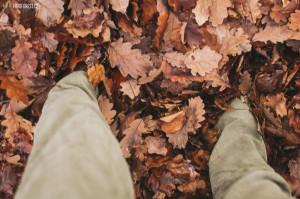 Zapadl jsem do listí