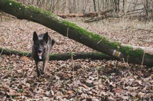 Buči v lese