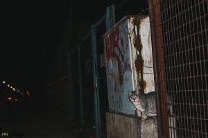 Kočky v Krpoli