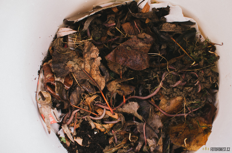 Domácí kompostér se žížalami