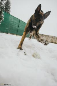 Pes a sníh