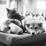 Duo Cacib výstava psů v Brně