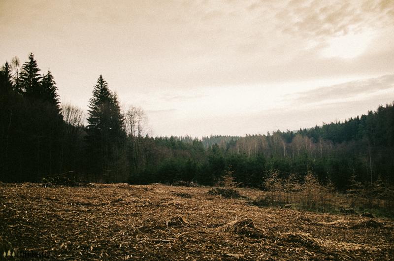 Mýtina a kácení stromů