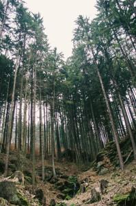 Cesta z Pernštejna
