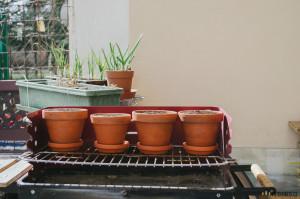 Sázení bylinek na jaře