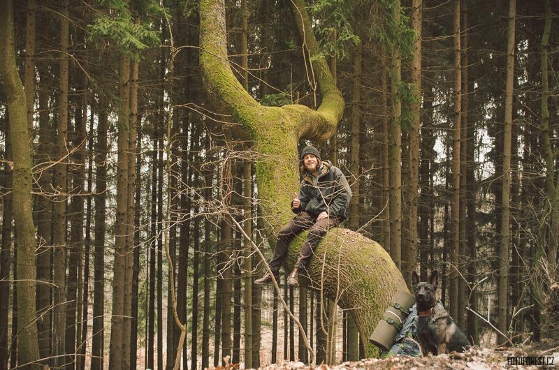 Forest na stromě