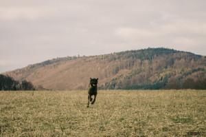 Se psem v lese