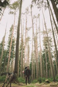 Forest v lese