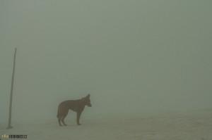 Mlha v Tatrách