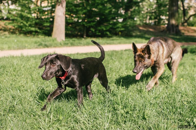 Pes voayer