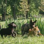 Venčení psů v Lužánkách