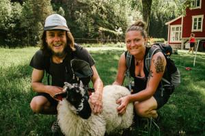 Ovce v Norsku