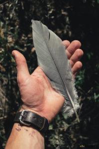 Ptačí brk