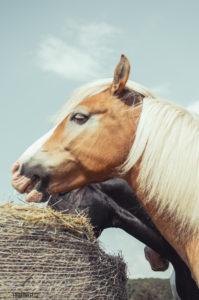 Ranch U Rezavé studánky