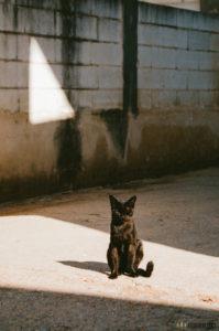 Psi a kočky ve Španělsku