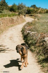 Toulavý psi ve Španělsku