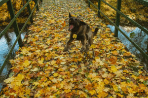 Podzim na Oslavce