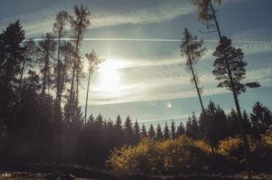 V lese u Třebíče